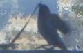 [160620][小鳥]