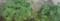 [160714][大葉の鉢]