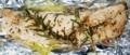 [161227][秋鮭ホイル焼]