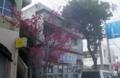 [180224][街の桜]