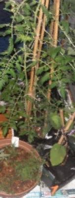 [180407][鉢]