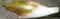 [190719][茗荷(大長2)#01]