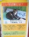 [200702][いちば猫(里親募集)]