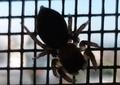 [210924][小蜘蛛]