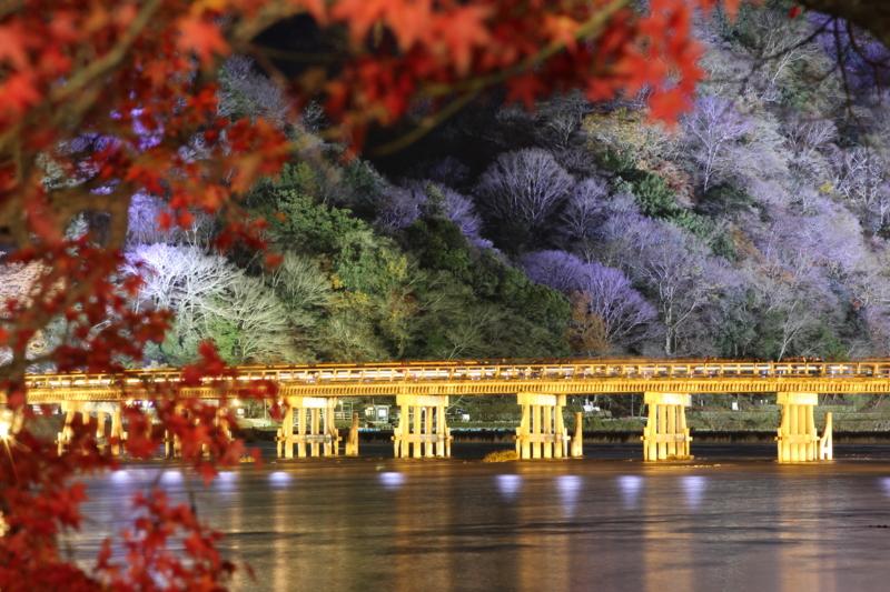 京都新聞写真コンテスト 残秋のライトアップ