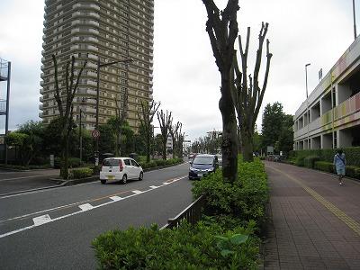 f:id:s_fujisaki:20170926203810j:plain