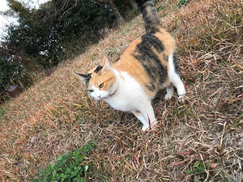f:id:s_harumi:20171224001410j:image