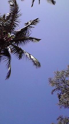 f:id:s_tropical:20100813223656j:image