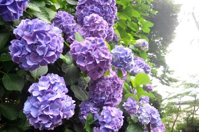 2010_0705_01.jpg