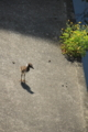 [鳥]鳧(ケリ)の親子