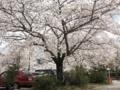 [花]伊勢神宮の駐車場