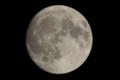 [月]中秋の名月