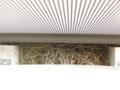 スズメの巣 撤去