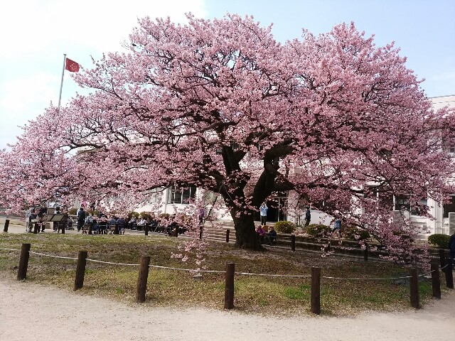 f:id:sabayoko:20170317185652j:image