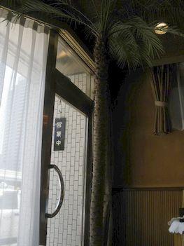椰子の木の入口