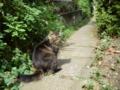 【新宿区】若松商店会。8歳のペルシャ系雑種。飼い猫。