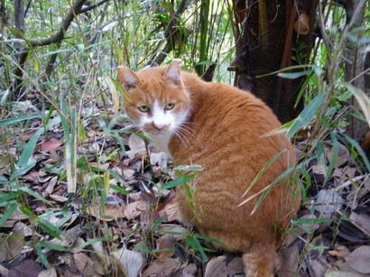三四郎池の猫
