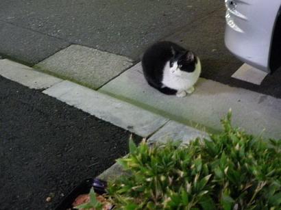 猫のダイちゃん