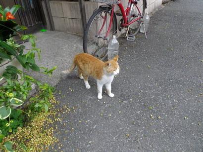 家から出てくる猫