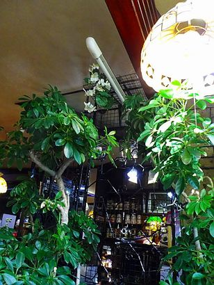 珈琲 木の実