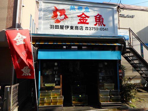 武蔵新田・金魚・羽田屋伊東商店