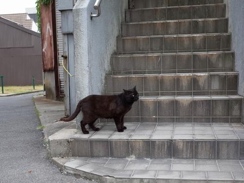 米子・朝日町5