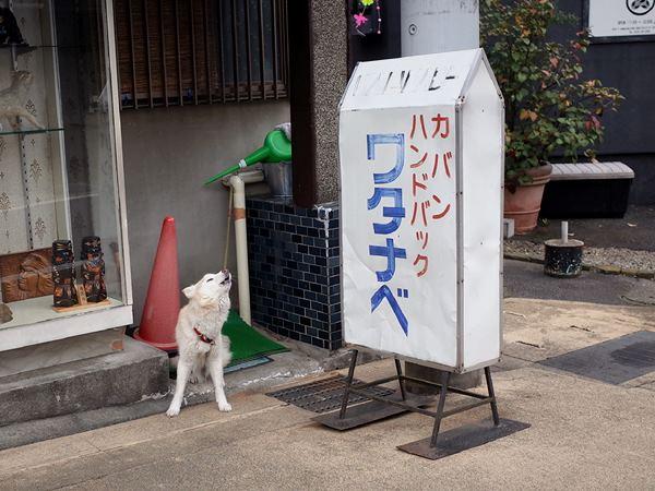 成田・新道商店街8