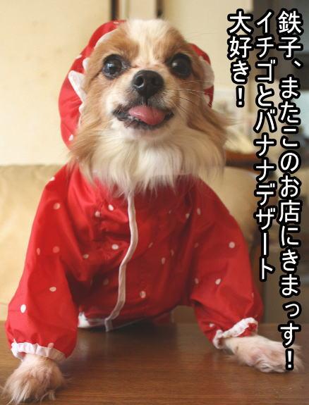 f:id:sabu36:20100317214551j:image