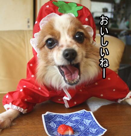 f:id:sabu36:20100317214558j:image