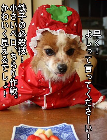 f:id:sabu36:20100317214602j:image