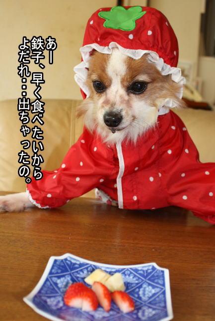 f:id:sabu36:20100317214605j:image