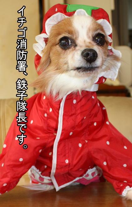 f:id:sabu36:20100317214909j:image