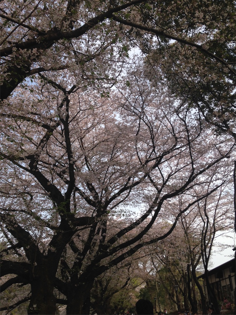 f:id:sabuochan:20180402215319j:image