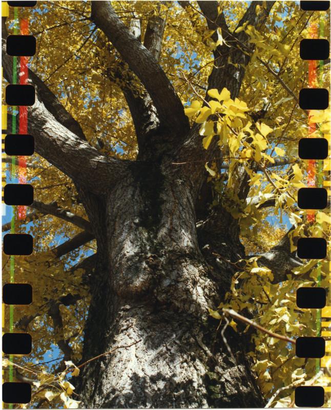 f:id:sacano-hidetoshi_19:20121215174127j:image