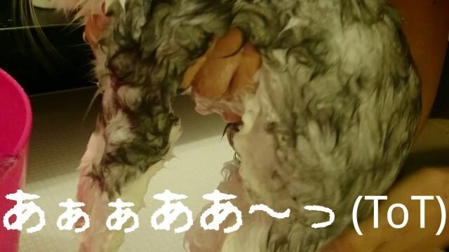 f:id:sachcooky:20170830110440j:plain