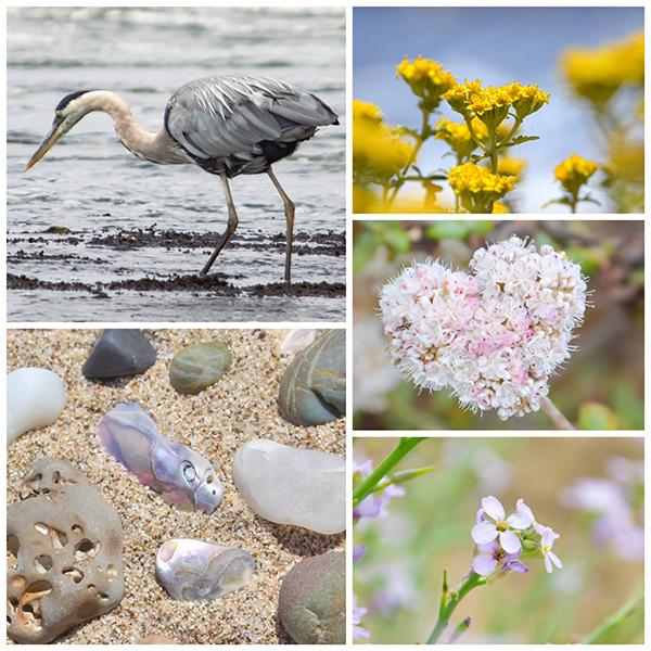 アオサギ、花、海岸の石や貝