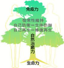 f:id:sachi0915:20180110122441j:plain