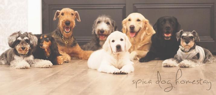 犬のしつけ 訓練 栃木県 ドッグトレーニング 問題行動 パピートレーニング 子犬のしつけ