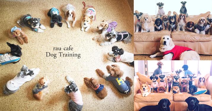 犬のしつけ 訓練 栃木県 ドッグトレーニング 問題行動 パピートレーニング 松戸市 柏市 子犬のしつけ