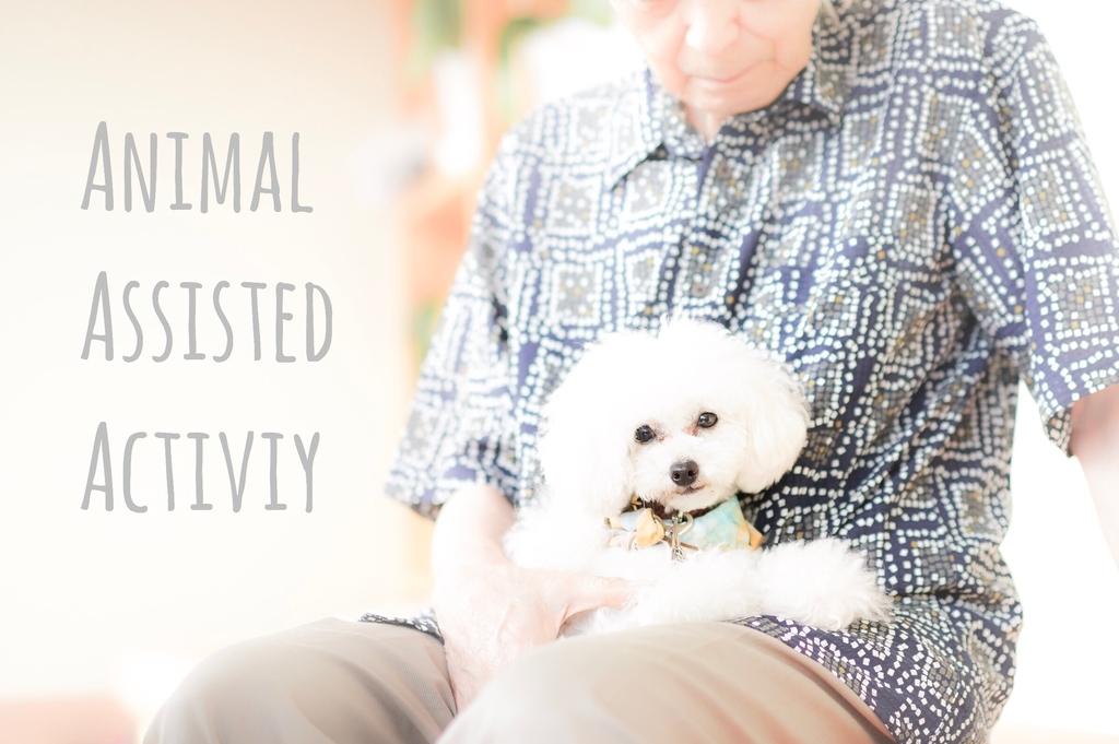 アニマルセラピー ドッグセラピー 動物介在活動 認知症 高齢者施設 ボランティア