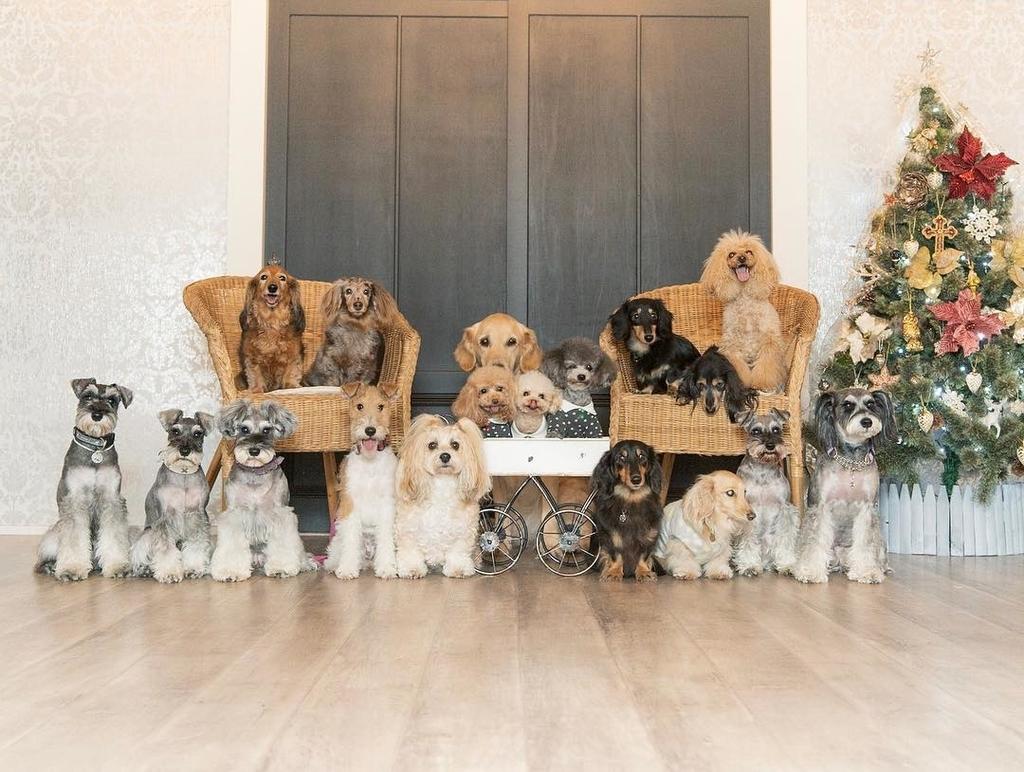犬のしつけ 訓練 栃木県 ドッグトレーニング 問題行動