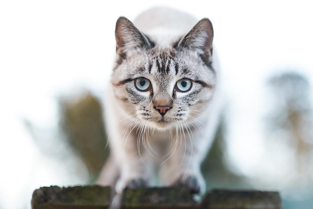 アニマルコミュニケーション アニマルコミュニケーター 猫 猫の気持ち