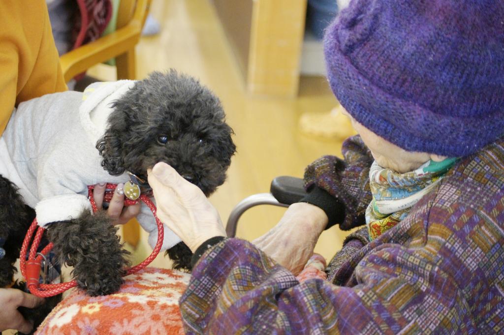 アニマルセラピー ドッグセラピー 動物介在療法 認知症 高齢者施設 ボランティア