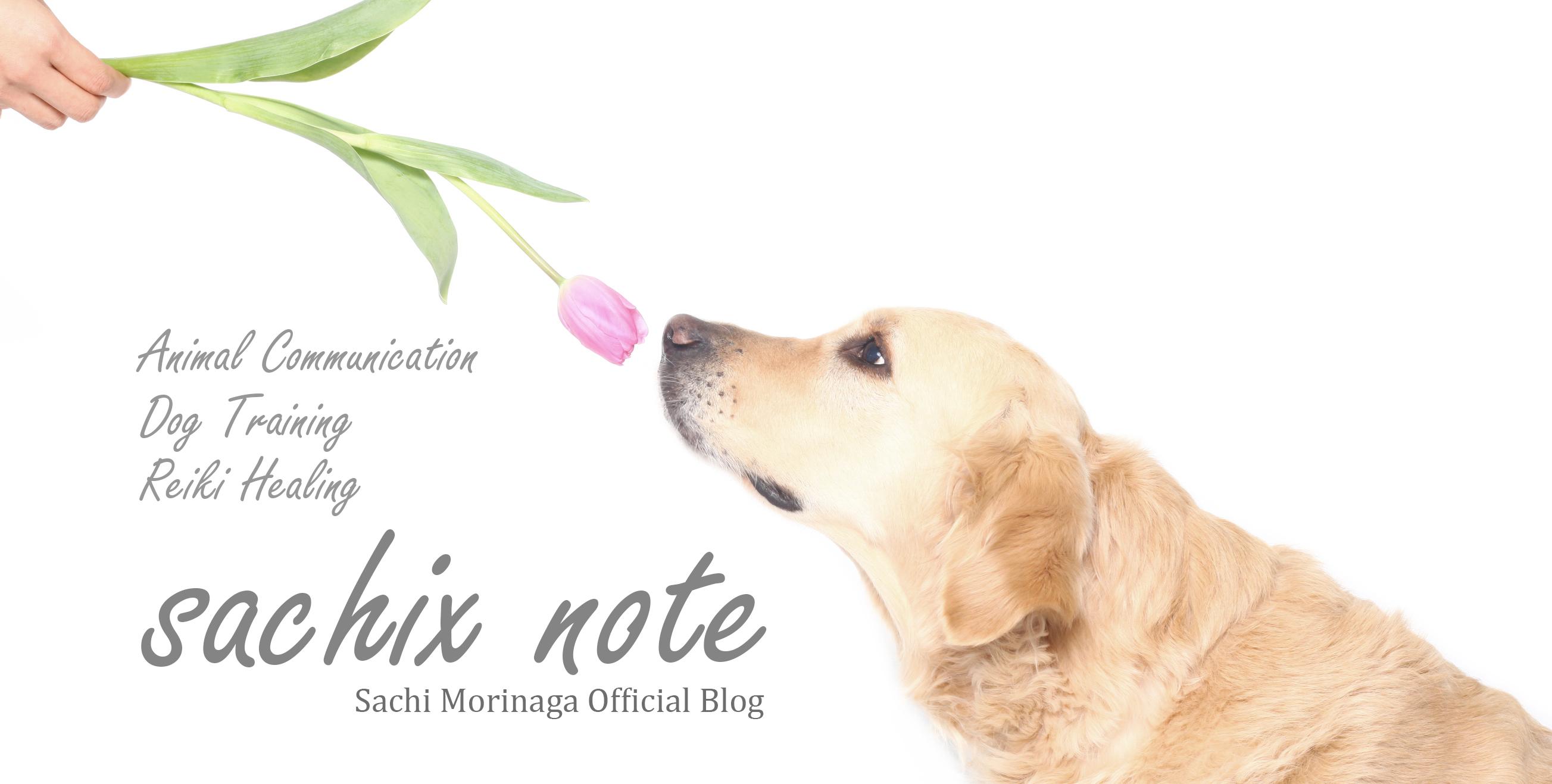 sachix note
