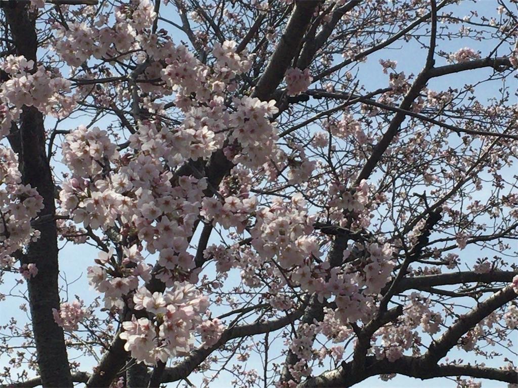 f:id:sachiyoga:20170410144648j:image
