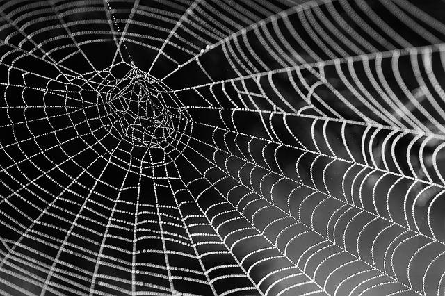 蜘蛛の巣のイメージ画像