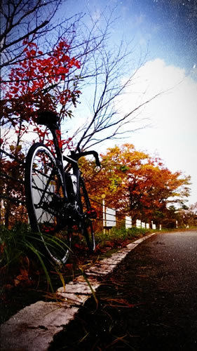 f:id:sado_roadbike:20161109204420j:plain