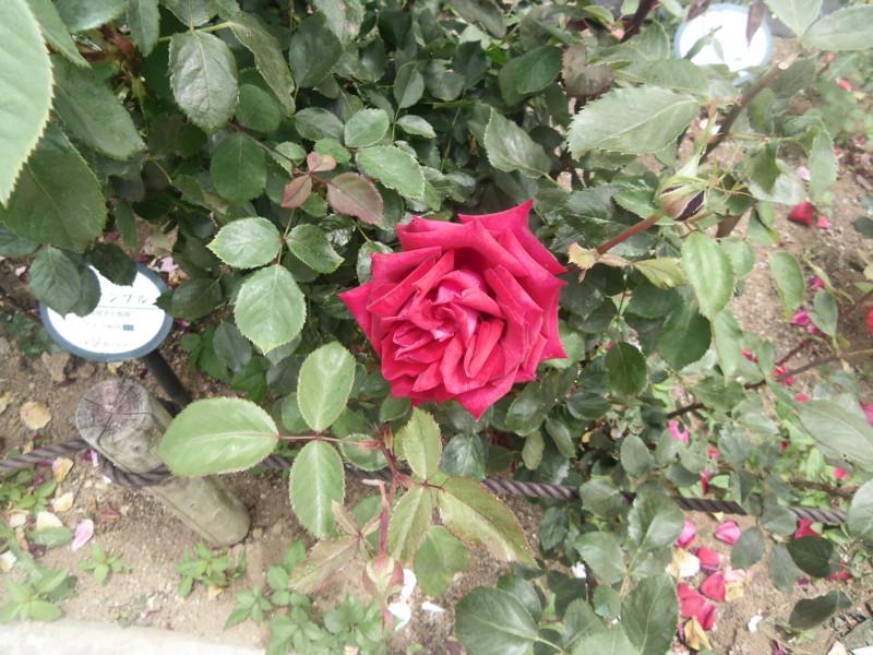 f:id:saebou:20130528143432j:image
