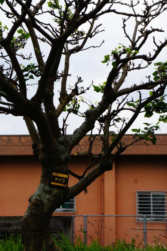 f:id:safelight:20120421150739j:image
