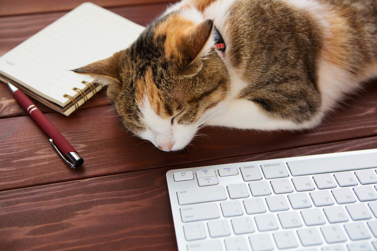 ペットの食にかかわる勉強、およびホームページ作成